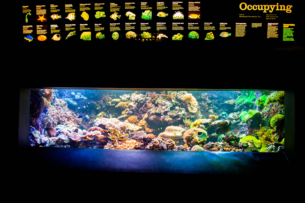 Baltimore, MD National Aquarium