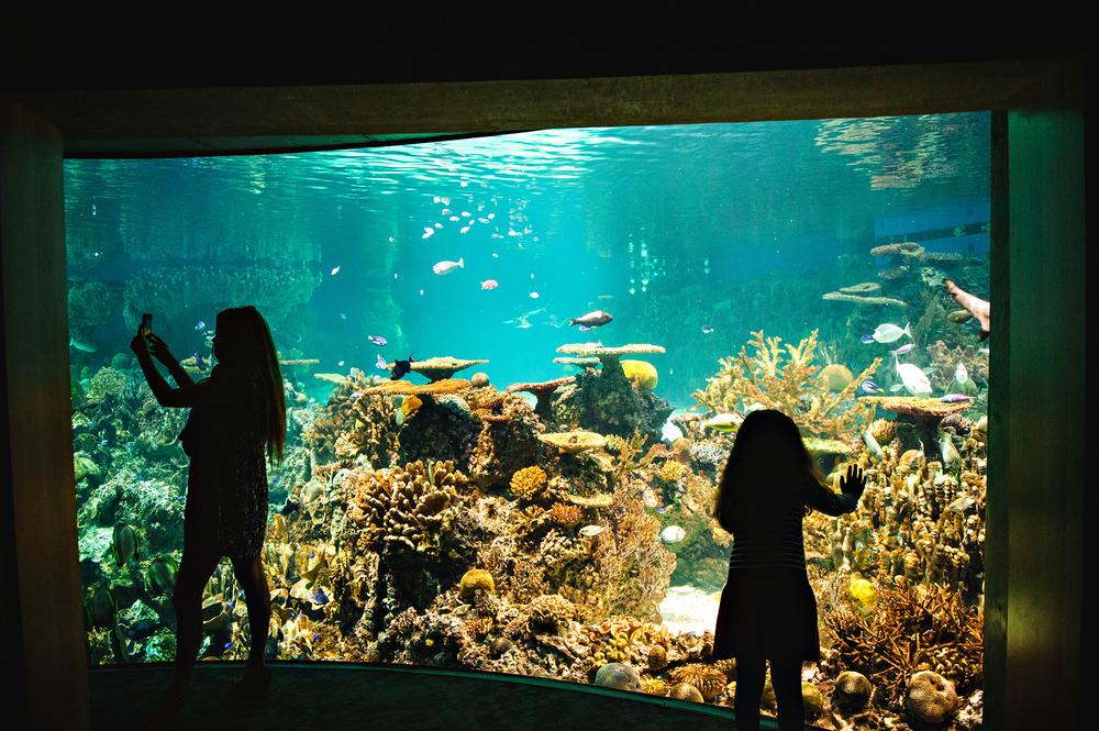 The National Aquarium Baltimore Md Jennifer Lee