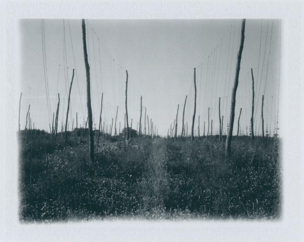 Untitled (16).jpg