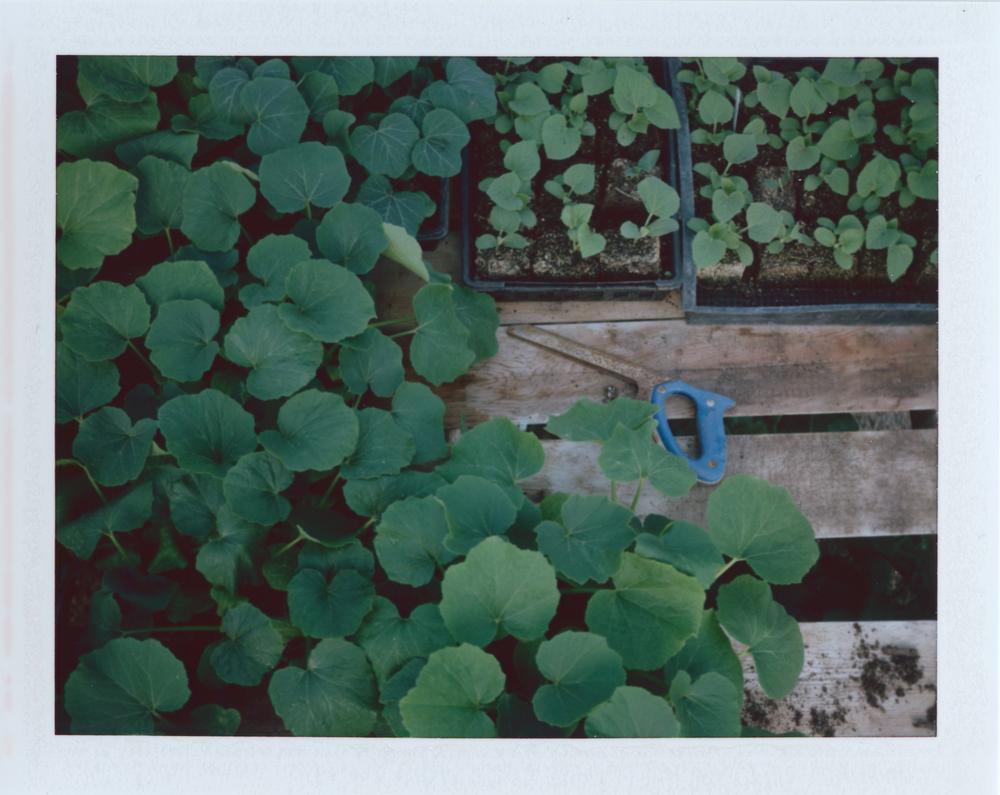 Untitled (19)-2.jpg