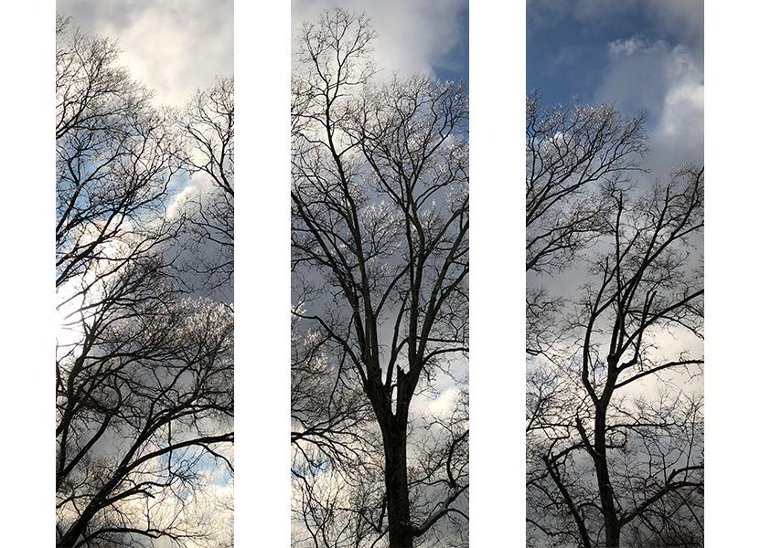 winter tree triptych 2.jpg