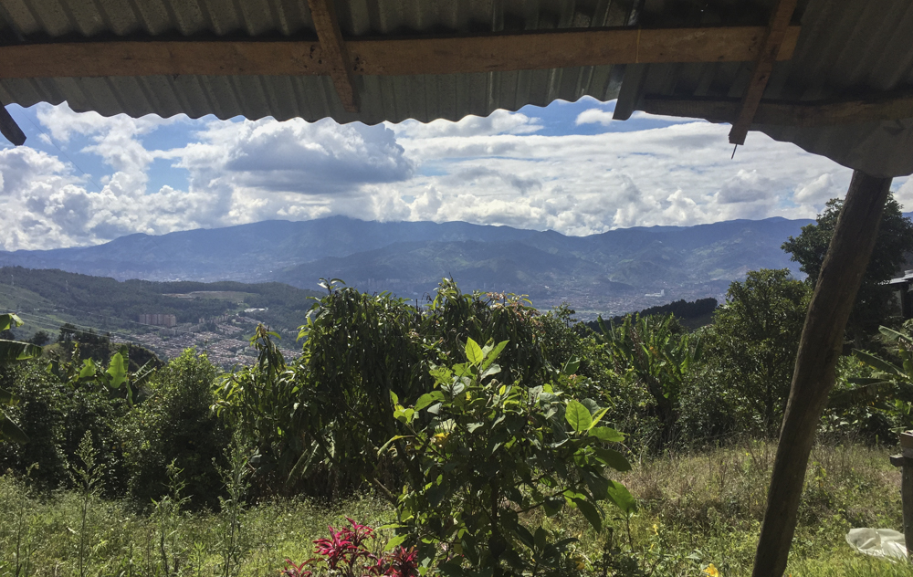 View from a present-day Colombian coffee farm that was a drug lab a few years ago.