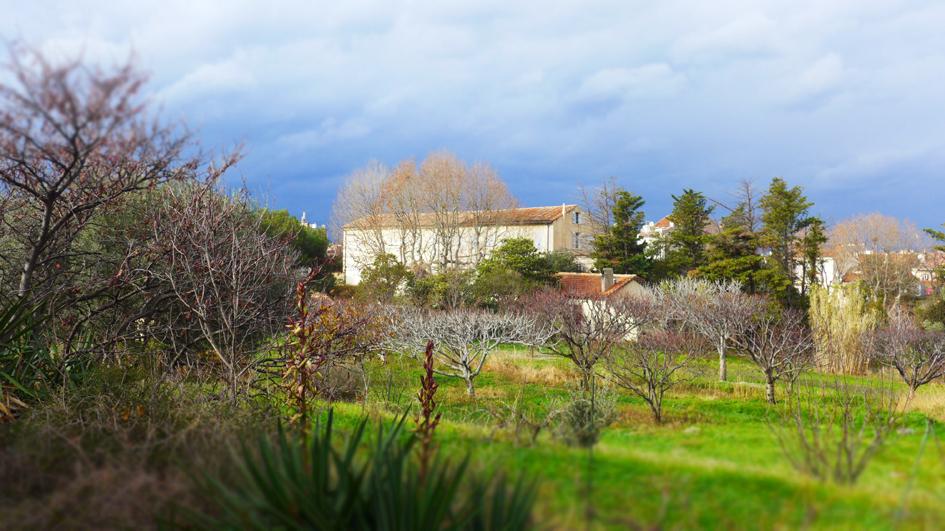 convent garden.jpg