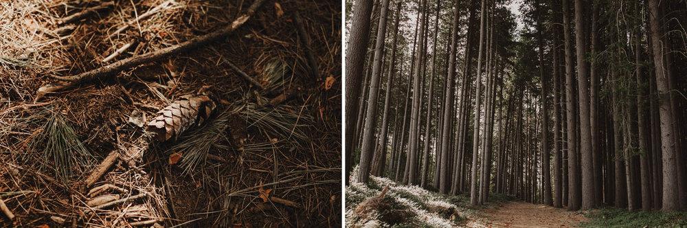 suger-pine-walk-wedding (Corinna & Dylan)_123(3024)2.jpg