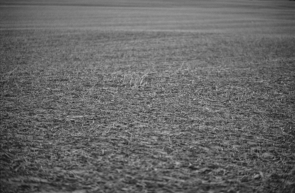 gray landscape 2 Crop 1400px 2.jpg
