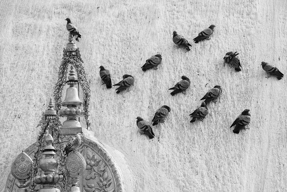 Pigeons BW.jpg