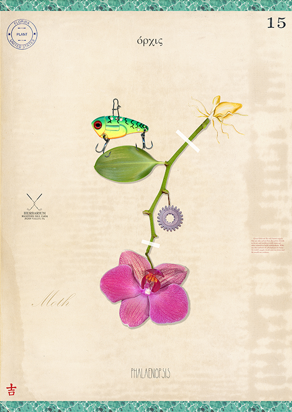 Supermarket Orchid with Lure - 22x15