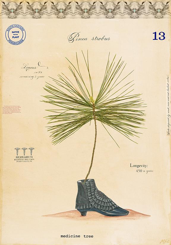 Medicine Tree - 24x18