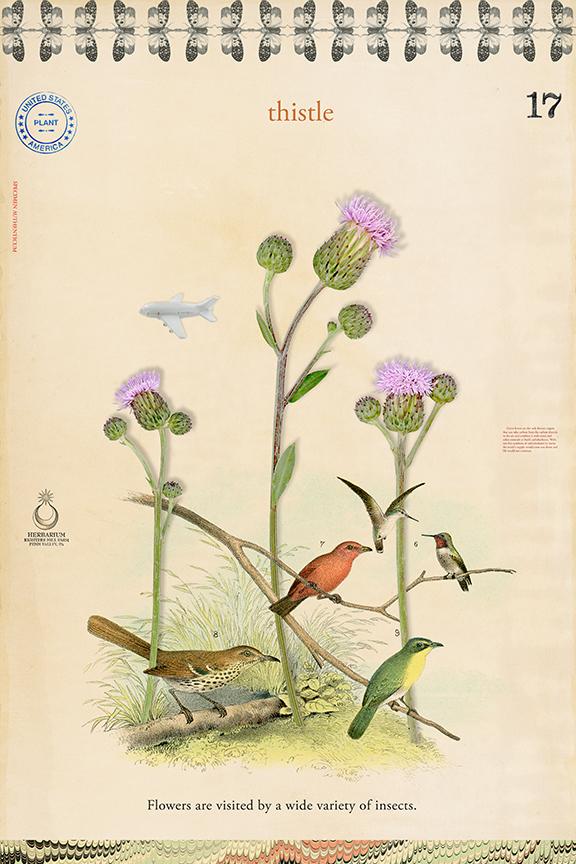 Thistle Birds - 27x18