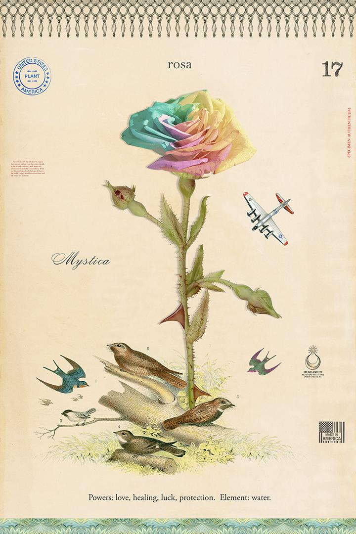 Rainbow Rose - 27x18