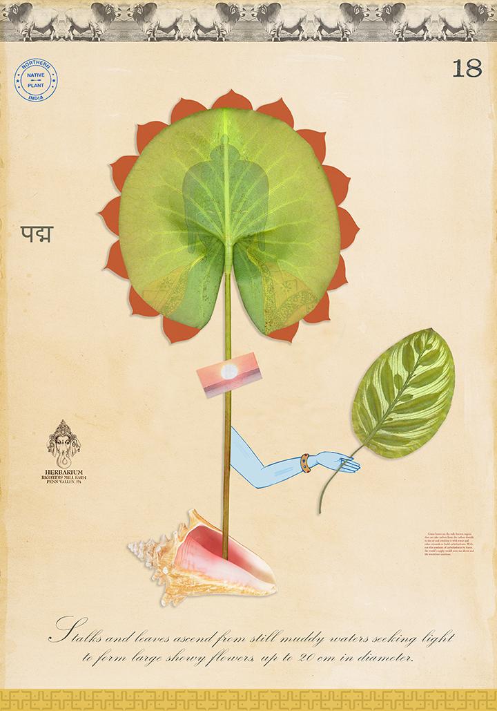 Sacred Lotus with Limb - 36x24