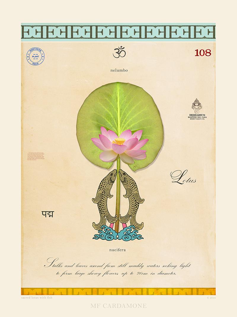 Sacred Lotus with Fish