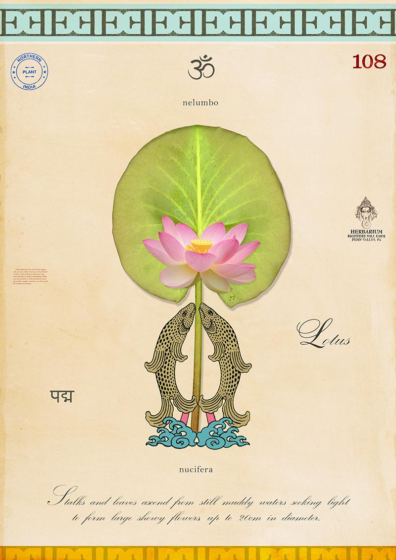 Sacred Lotus with Fish - 20x14