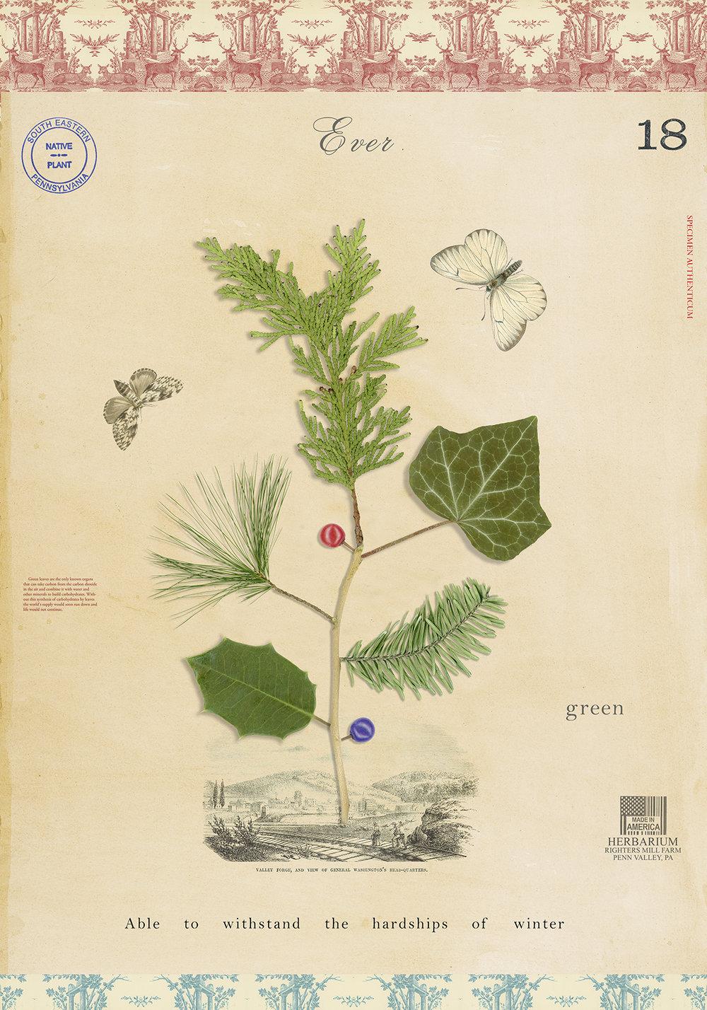 Evergreen - 20x14