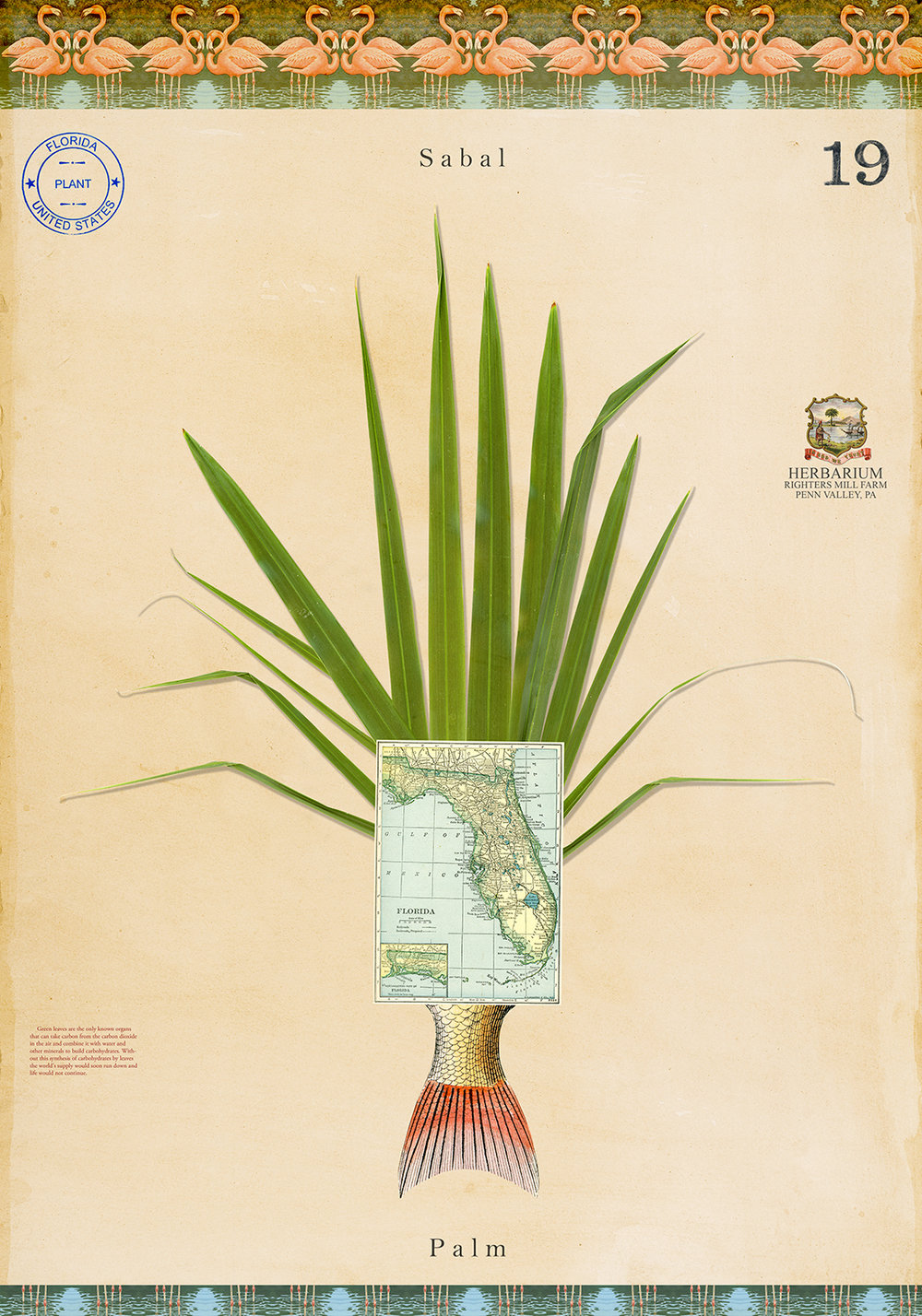 Sabal Palm with Map - 20x14