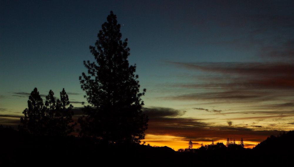 morning-tree-0056.jpg