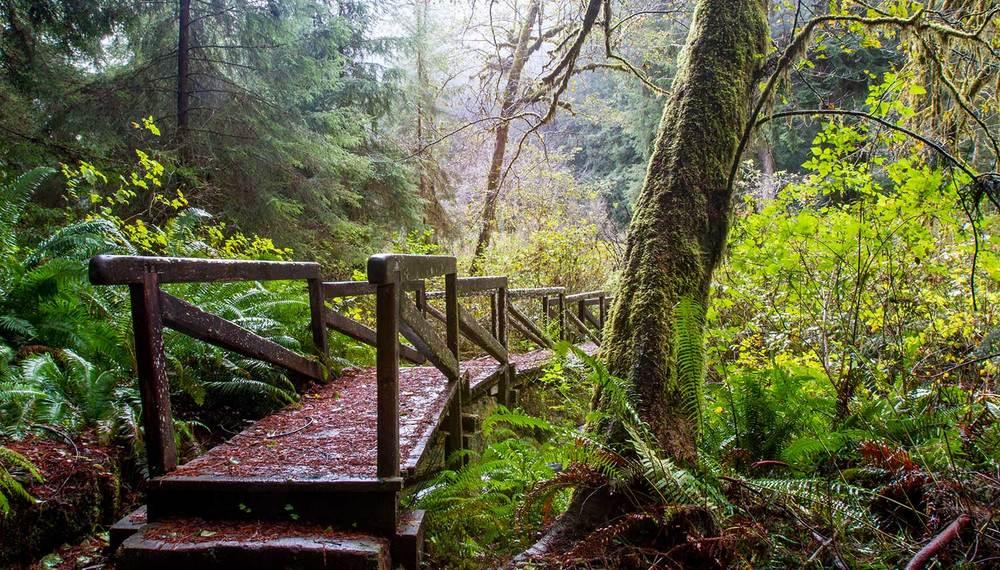 redwoods-0120.jpg