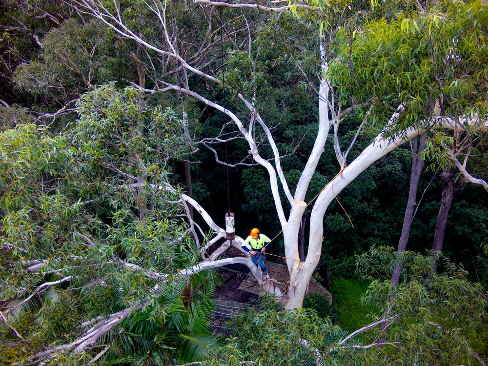 Arborist - Tree surgeon