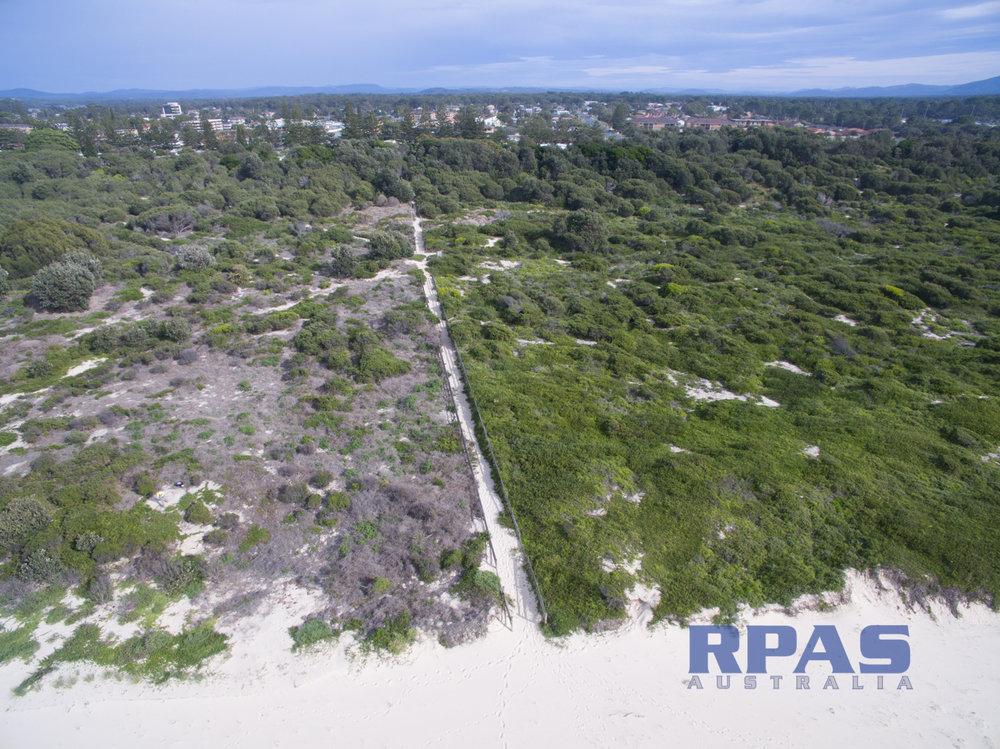 bush regeneration weed management