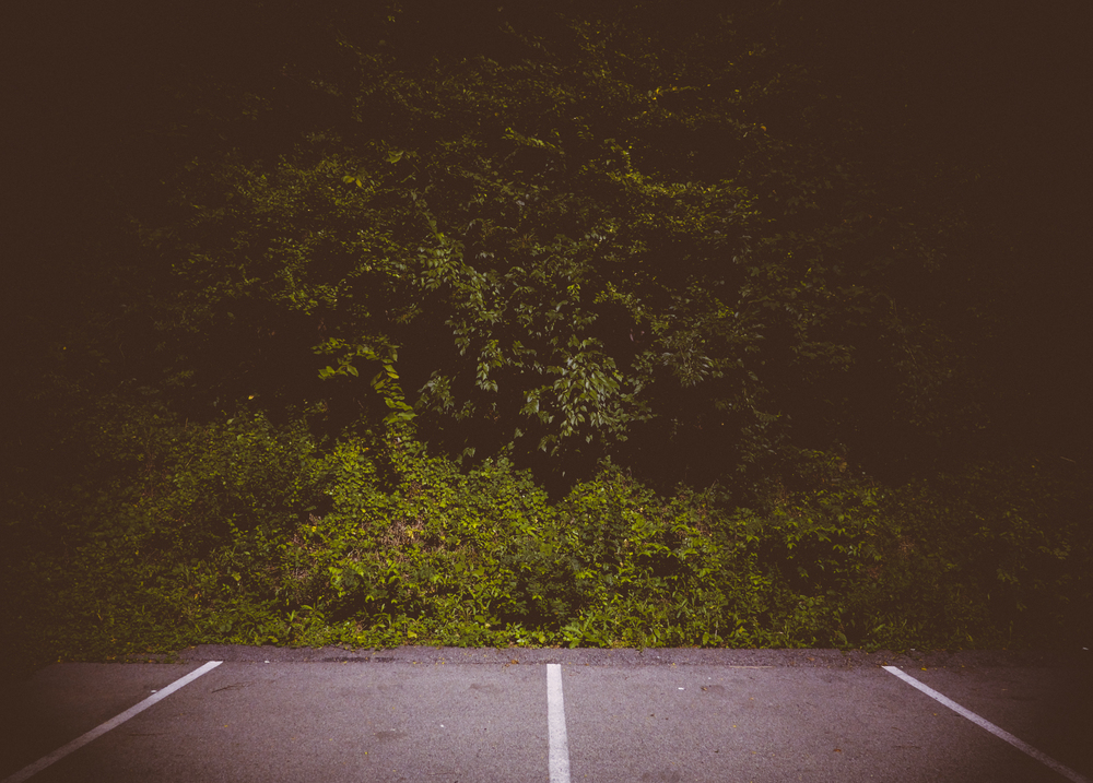 Trees - WRCT Pittsburgh (Parking lot)