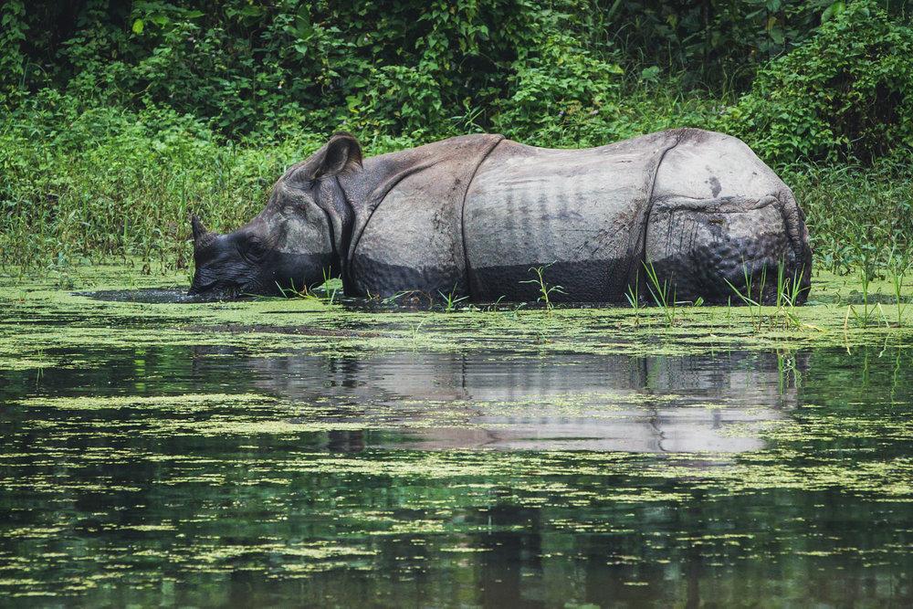 Rhinos...  200mm f7.1 1/500 ISO800