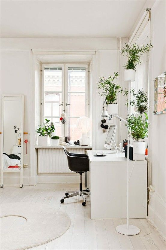 An office full of indoor plants provide a calming work enviroment.