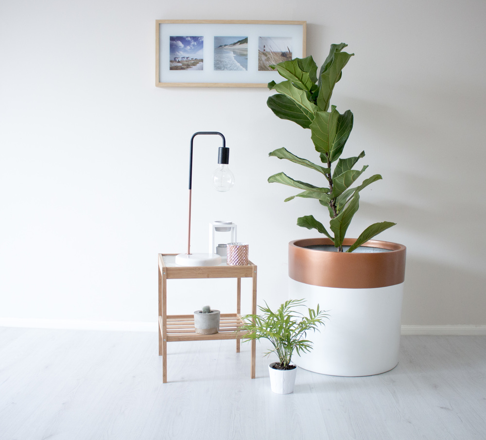 Product Photography & Styling Pot  - Modern Muse