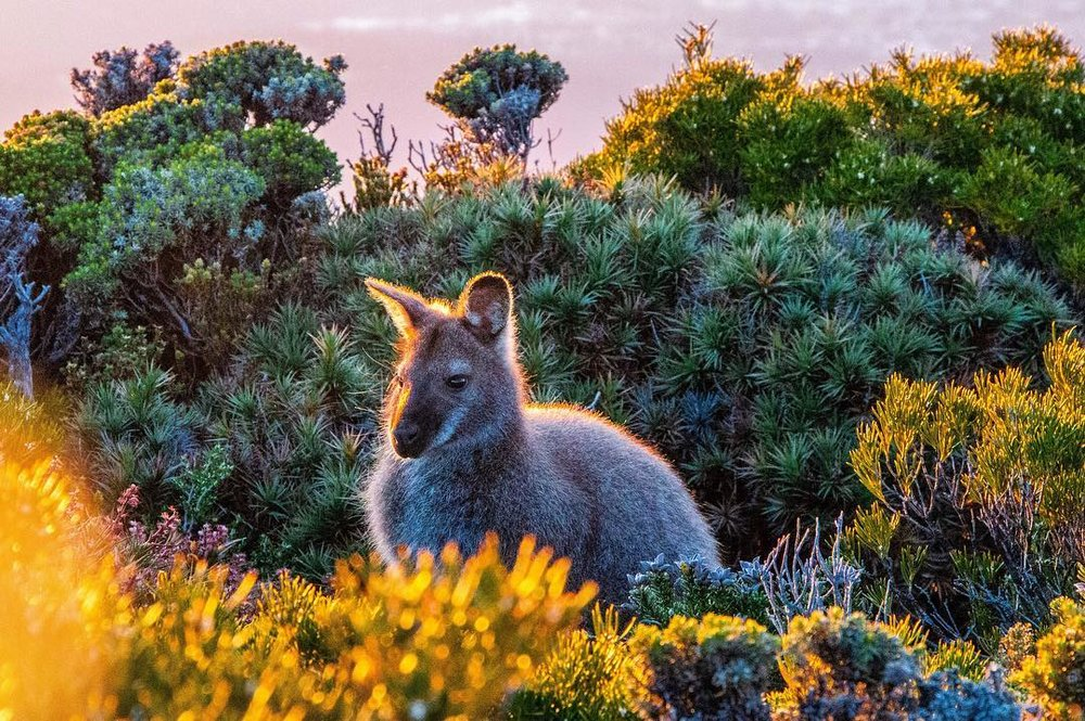 Morning Glow, Mt Wellington, Tasmania