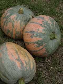 Bohemian+Pumpkins.JPG