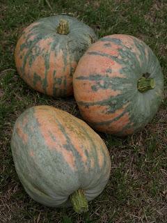 Bohemian+Pumpkins+1.JPG