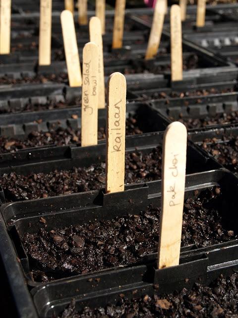 Close+up+seeds+sown.JPG