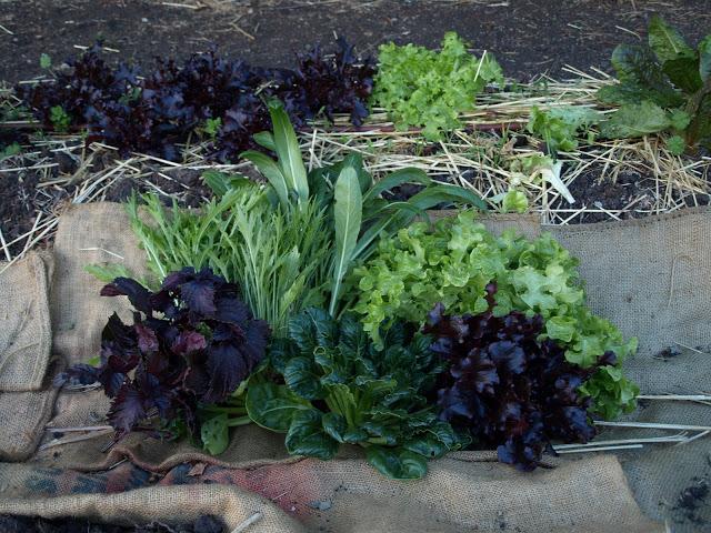 salad+success.JPG