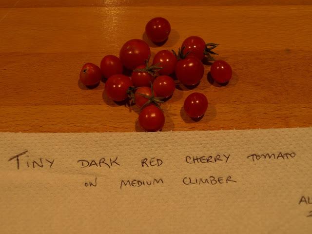 tiny+dark+red+cherry.JPG