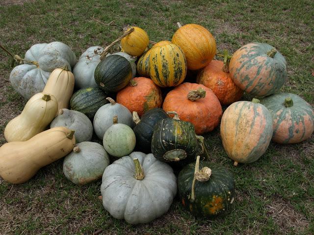 Pumpkin+collection.JPG