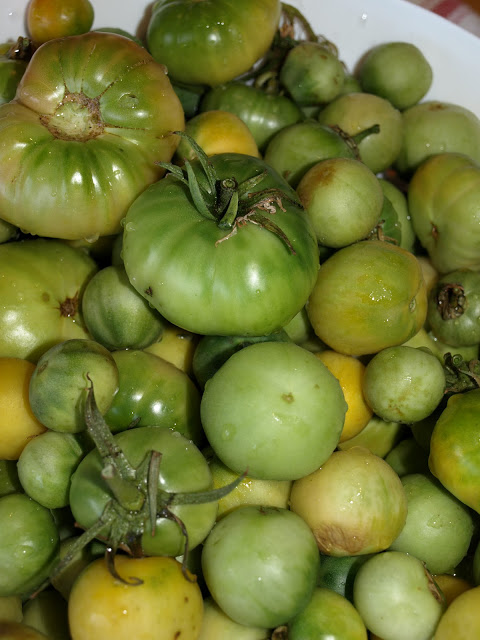 The+Green+Tomatoes.JPG