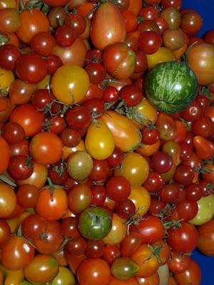 Amazing+Tomatoes.JPG