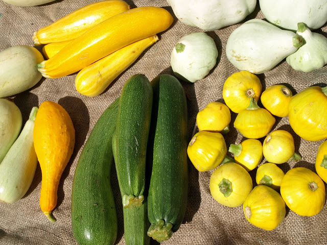 Zucchini+and+Squash+Collection+1.JPG