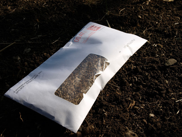 Dill+Seeds+in+Envelope.JPG