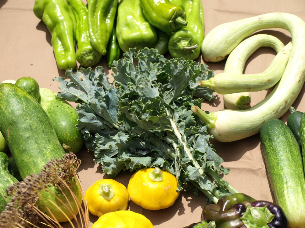 Squash, Cucumber, Curly Kale and Tromboncino Zucchinis