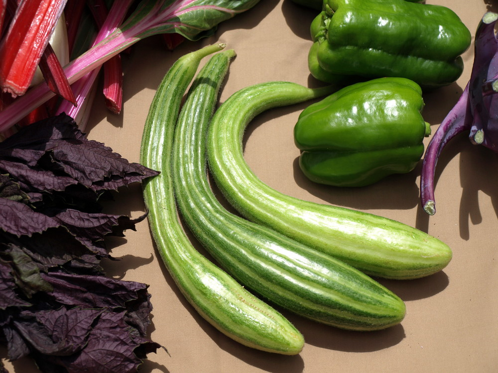 Sweet and Striped Cucumbers