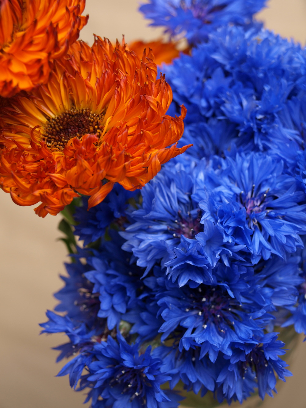 Corn Flowers and Calendulas