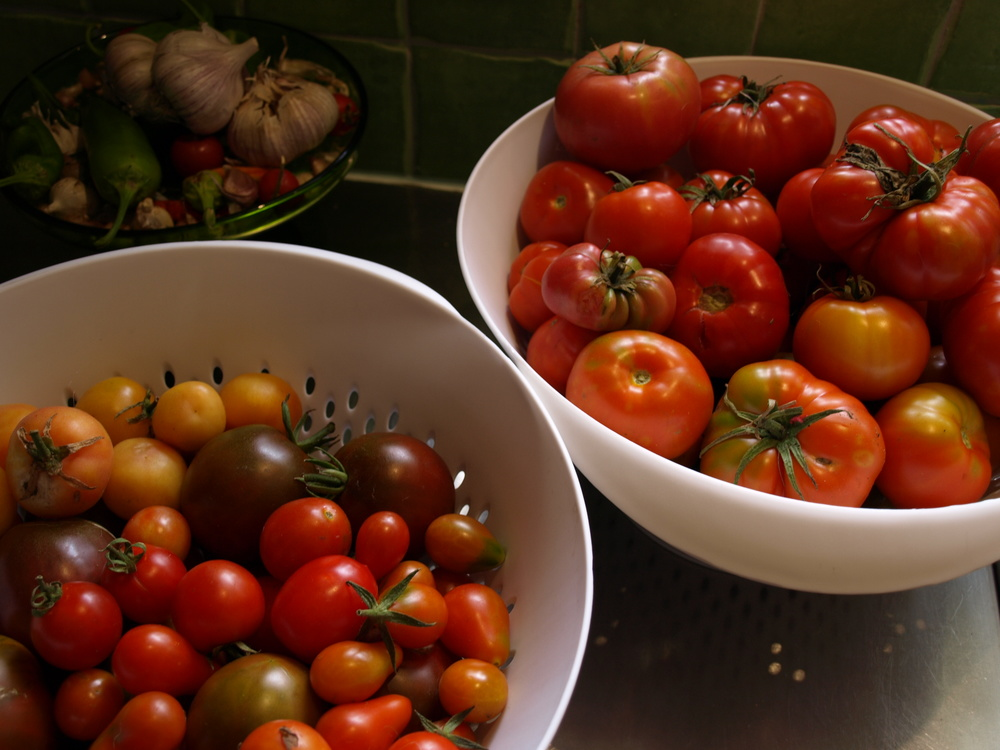 Lots of different tomatoes