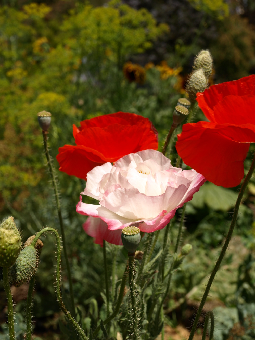 I'm loving all the flowers, like these poppies