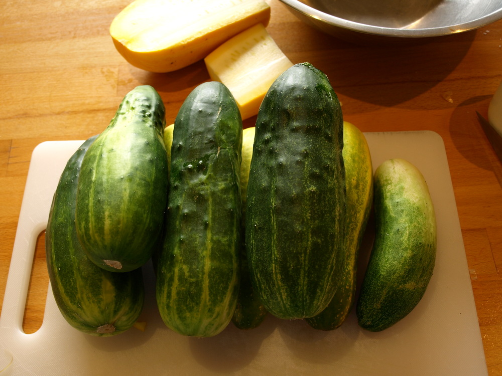 cucumbers in the kitchen