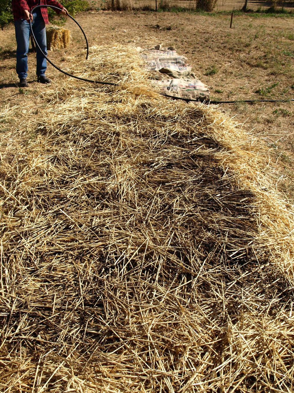 more manure on straw.JPG