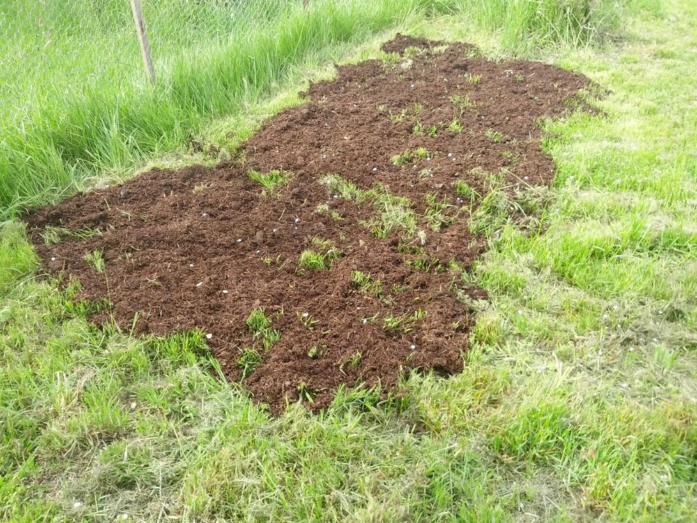 Mushroom compost.jpg