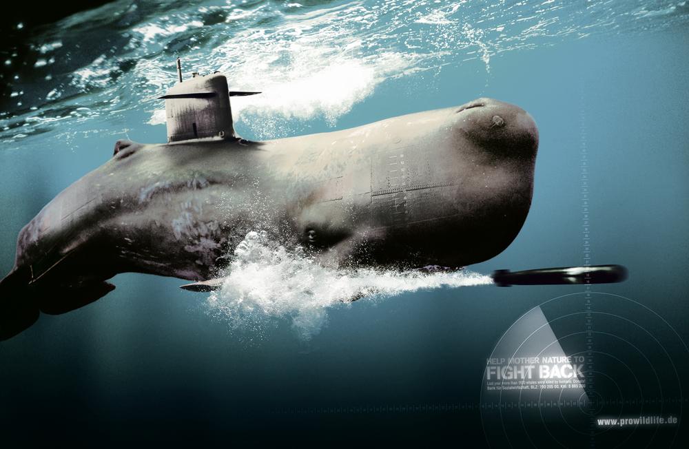 dk_pw_whale.jpg