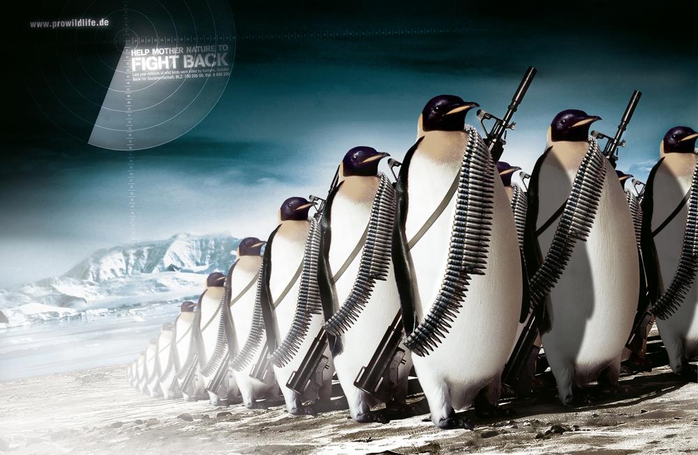 dk_pw_penguines.jpg