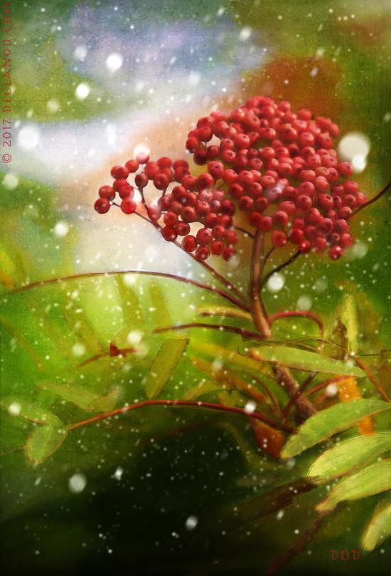 The Rowan Tree..