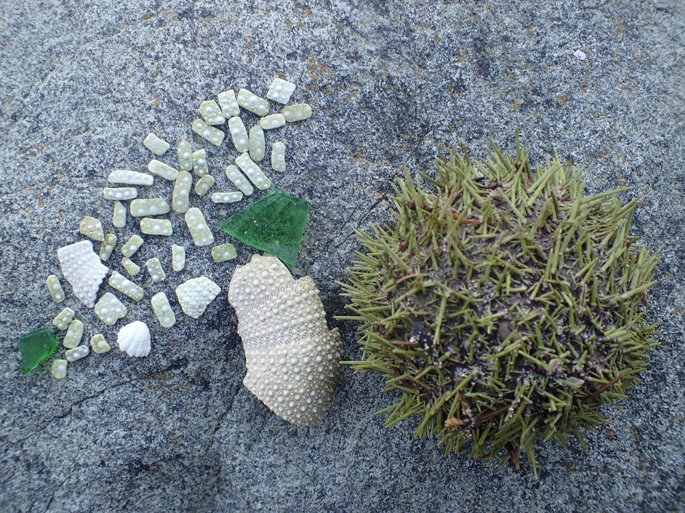 Island Art - sea urchin and beach-glass